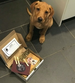 Staff Picks - Perfect Pawtrait: Dog Club Box Review